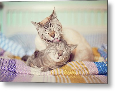Cat Licking Another Cat Metal Print by Viola Tavazzani Photography