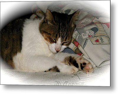 Metal Print featuring the photograph Cat Nap by The Art of Alice Terrill