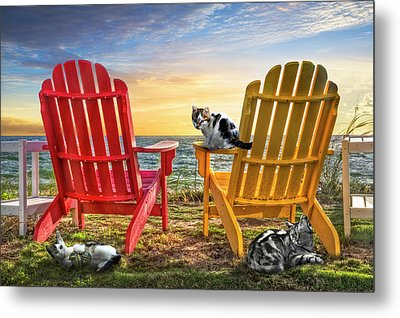 Metal Print featuring the photograph Cat Nap At The Beach by Debra and Dave Vanderlaan