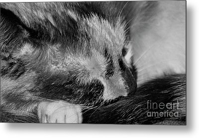 Metal Print featuring the photograph Cat Nap by Juls Adams