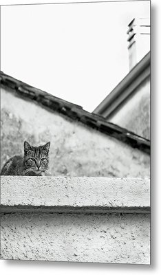 Cat On A Roof, Varenna Metal Print by Brooke T Ryan
