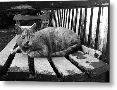 Cat On A Seat Metal Print