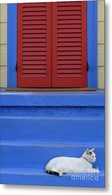 Cat On Blue Steps Metal Print by Jeanne  Woods