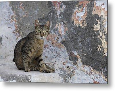 Cat On Stairs, Greece Metal Print by Jean-Louis Klein & Marie-Luce Hubert