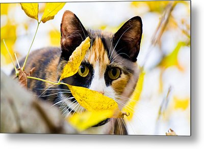 Cat On The Prowl Metal Print by Jonny D
