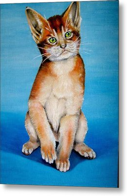 Cat Original Oil Painting Metal Print by Natalja Picugina