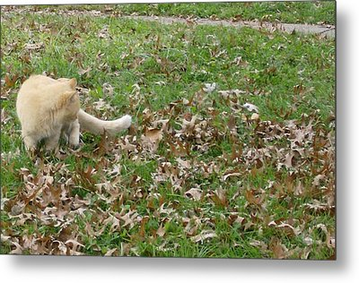 Cat Playing In The Leaves Metal Print