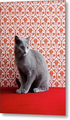 Cat (russian Blue) And Wallpaper Background Metal Print