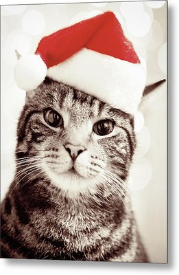Cat Wearing Christmas Hat Metal Print