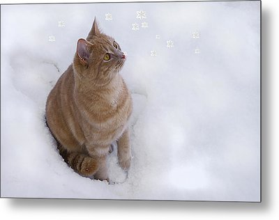 Cat With Snowflakes Metal Print by Jacqi Elmslie