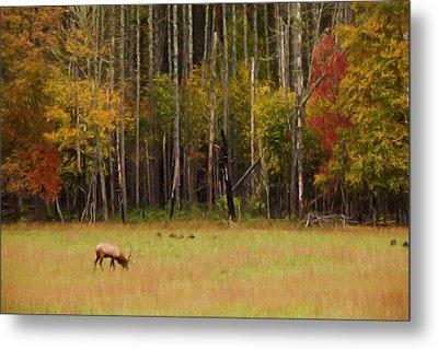 Cataloochee Valley Elk Metal Print