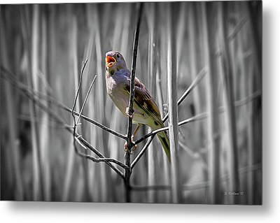 Catbird In The Reeds - Color Select Metal Print