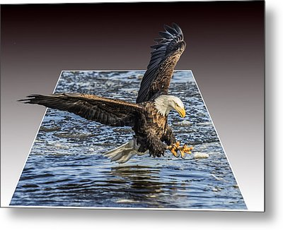 Catching Lunch Deluxe Metal Print by E Mac MacKay