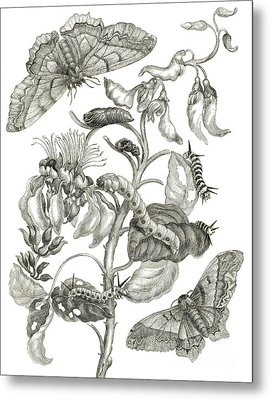 Caterpillars, Butterflies, And Flower Metal Print