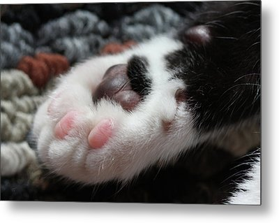 Cats Paw Metal Print by Kim Henderson