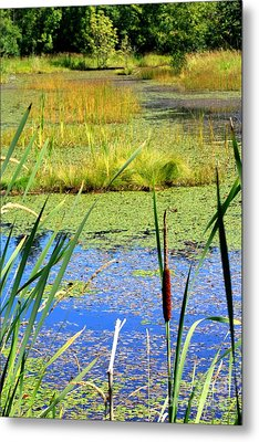 Cattail Metal Print by Chris Anderson