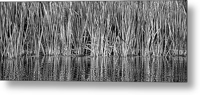 Metal Print featuring the photograph Cattail Reflection  by Britt Runyon