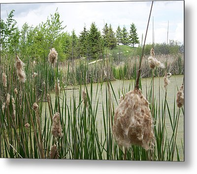Metal Print featuring the photograph Cattails by Mary Mikawoz