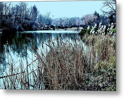 Cattails On The Water Metal Print
