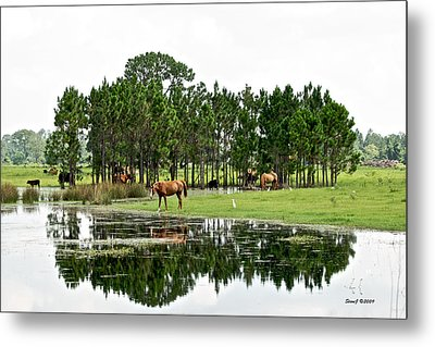 Cattle And Horse Ranch In Florida Metal Print