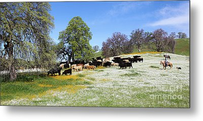 Cattle N Flowers Metal Print