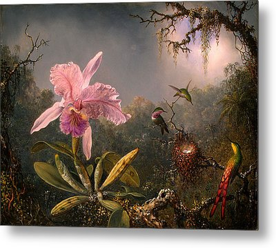 Cattleya Orchid And Three Hummingbirds Metal Print by