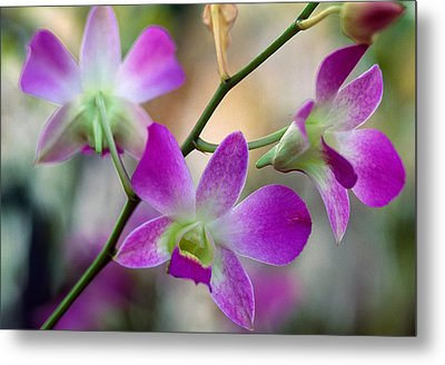 Cattleya Orchid Flower Blossoms, Close Metal Print by Panoramic Images