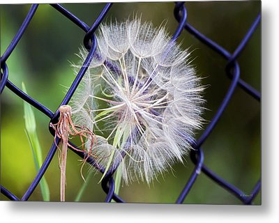Caught In A Web Of Intrigue Metal Print