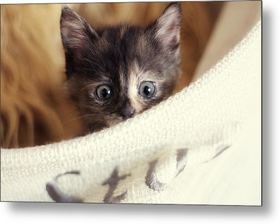 Metal Print featuring the photograph In The Hamper by Amy Tyler