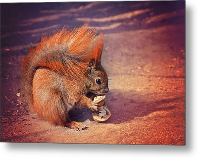 Caught Red Handed Metal Print by Carol Japp