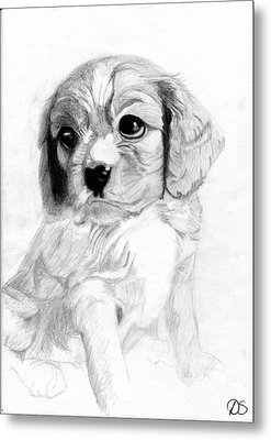 Cavalier King Charles Spaniel Puppy 2 Metal Print by David Smith