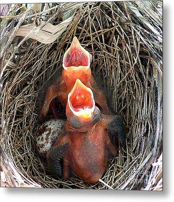 Cavernous Cardinals Metal Print
