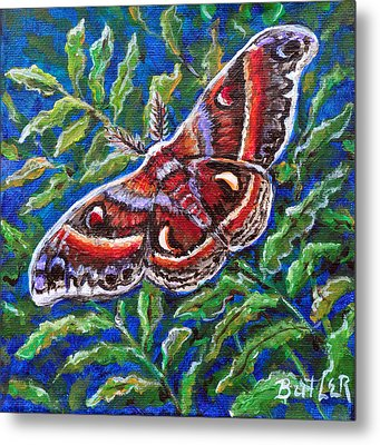 Cecropia Moth Metal Print by Gail Butler
