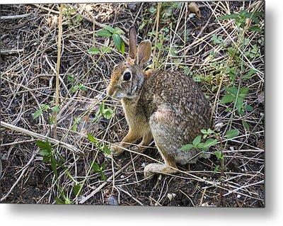 Cedar Hill Bunny Metal Print by Ricky Dean