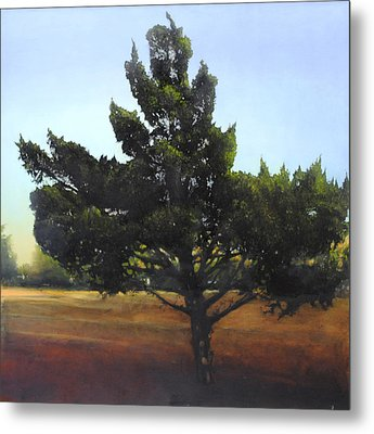 Cedar Sold Metal Print by Cap Pannell