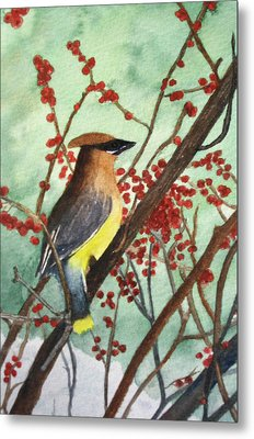 Cedar Wax Wing Metal Print by Sharon Farber