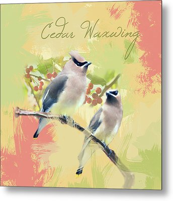 Metal Print featuring the photograph Cedar Waxwing Watercolor Photo by Heidi Hermes