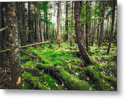 Metal Print featuring the photograph Cedar Woods by Robert Clifford