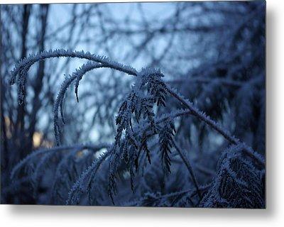 Cedars Of Ice Metal Print