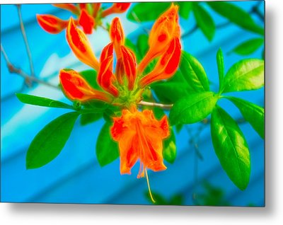 Metal Print featuring the photograph Celestial Skies Budding Azalea by Aimee L Maher Photography and Art Visit ALMGallerydotcom