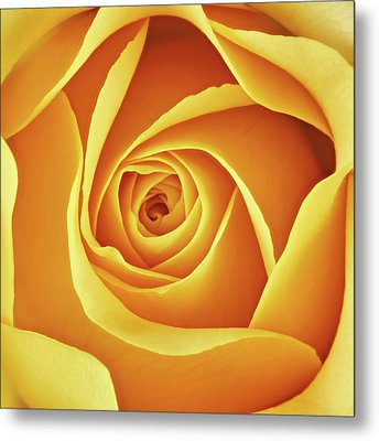 Center Of A Yellow Rose Metal Print by Jim Hughes