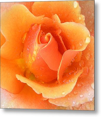 Center Of Orange Rose Metal Print by John Lautermilch