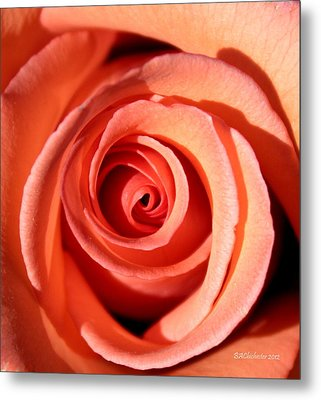 Metal Print featuring the photograph Center Of The Peach Rose by Barbara Chichester
