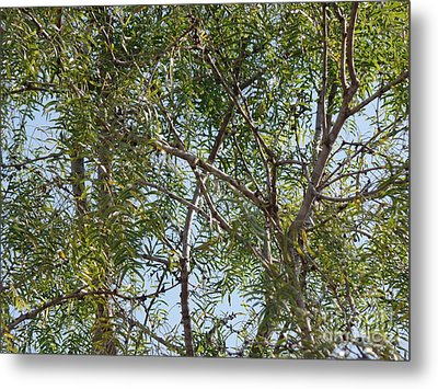 Metal Print featuring the photograph Central Texas Sky View Through Mesquite Trees by Ray Shrewsberry