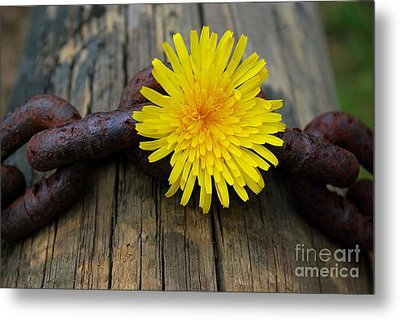 Chained Beauty Metal Print by John S