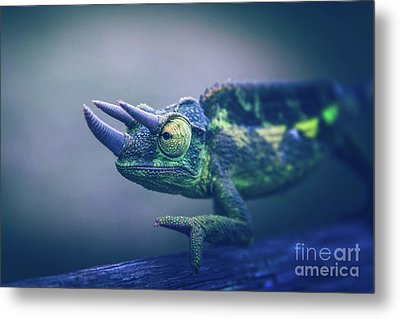Metal Print featuring the photograph Chamaeleo Jacksonii by Sharon Mau
