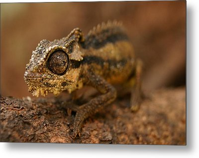 Metal Print featuring the photograph Chameleon by Riana Van Staden