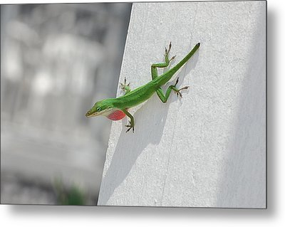 Chameleon Metal Print by Robert Meanor