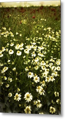 Metal Print featuring the painting Chamomile Lawn by Frank Tschakert