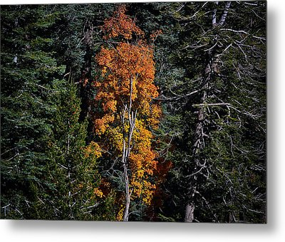 Change Of Seasons Metal Print